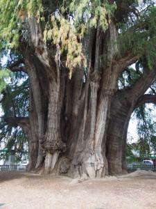 Tree of Life, Oaxaca, Mexico