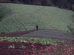 Farmers near