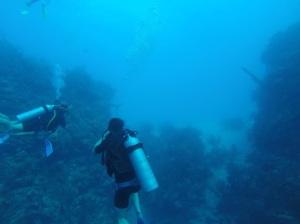 Shark at Half Moon Caye