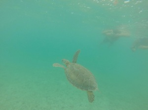 Akumal'so Turtle Beach