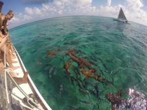 Snorkelling with sharks, stingrays and turtles in Caye Caulker, Belize