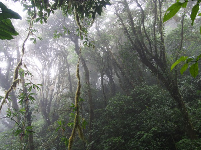 Hiking through Maderas Volcano's cloud forest, Ometepe