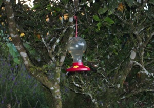 Camouflaged hummingbirds, Monteverde, Costa Rica