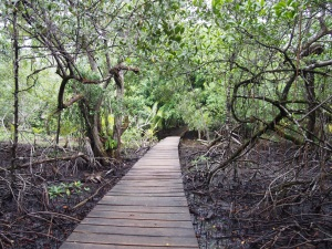 Bastimentos, walkway to Red Frog Beach