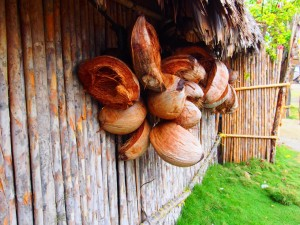 Coconuts are the livelihood of the San Blas people