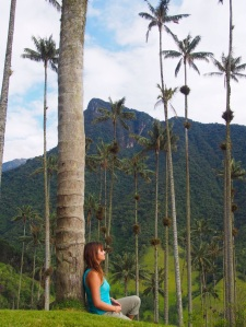 World's tallest palm trees, Cocora Valley, Colombia