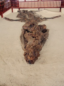 El Fosil, kronosaurus fossil, Villa de Leyva