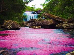 Caño Cristales, Liquid Rainbow, Colombia
